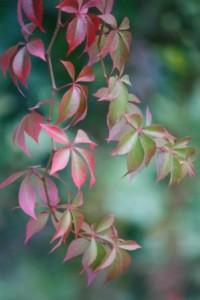 web leaves
